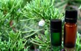 cypress_oil_3