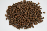 allspice seed